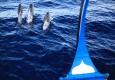 Dolphin_Cruise